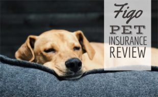 Dog laying on bed (Caption: FIGO Pet Insurance Review)