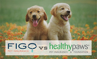 Two puppies in field (caption: Figo vs Healthy Paws)