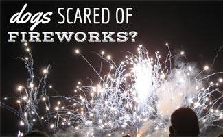 Fireworks: Dogs Scared of Fireworks