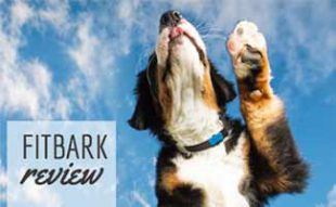 Dog with FitBark jumping: FitBark Review