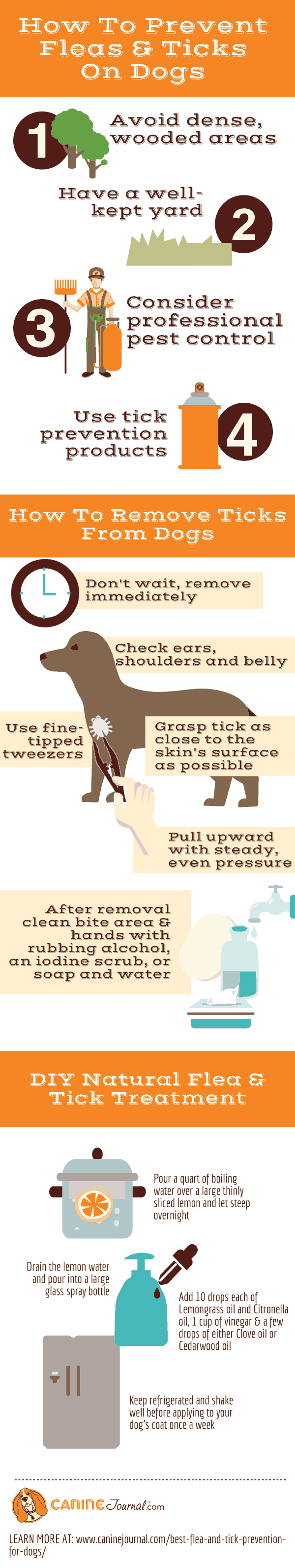 How To Get Rid Of Fleas Infographic