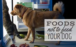 Dog and cat at open fridge (caption: Foods Not To Feed Your Dog)