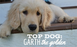 Garth the Golden laying on stairs