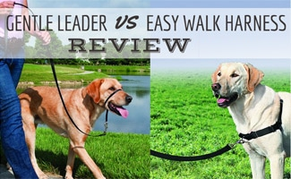 Two dogs with Gentle Leader and Easy Walk Harness