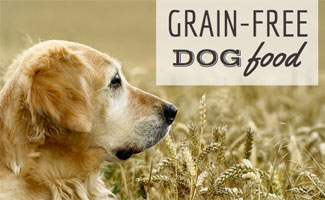 Golden in field of grain