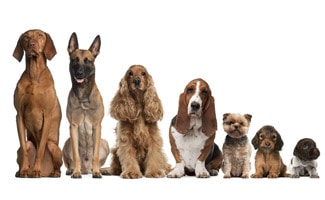 Dog Breed List: We've Got Them All | CanineJournal com