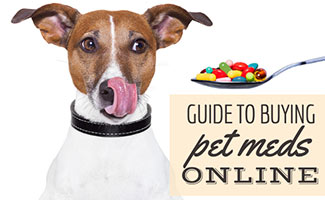 Dog with spoon full of pills (Caption: Guide to Buying Pet Meds Online)