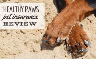 Dog's paws in sand