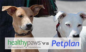 Two dogs sitting (caption: Healthy Paws vs Petplan logos)