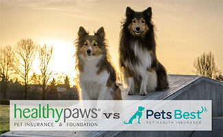 Two dogs sitting in sunset (caption: Healthy Paws vs Pets Best logos)