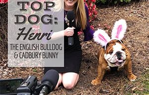 Top Dog Henri The English Bulldog & Cadbury Bunny being interviewed