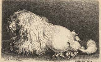 Historical photo of Poodle
