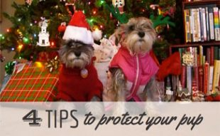4 Tips to protect your pup