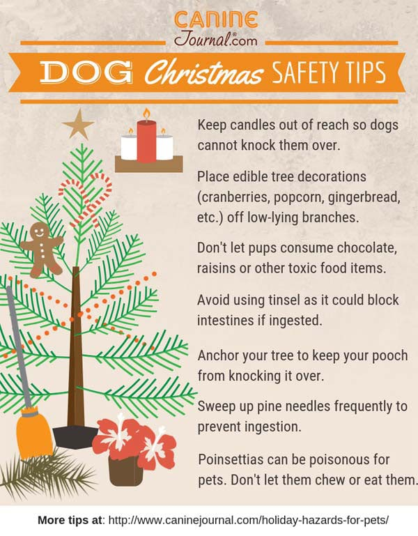 Pet Holiday Hazards Infographic
