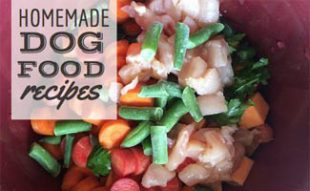Bowl of homemade dog food veggetables