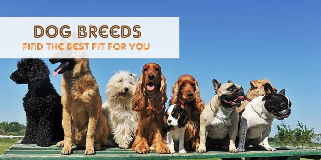 Dog Breeds: Find the Best Fit For You