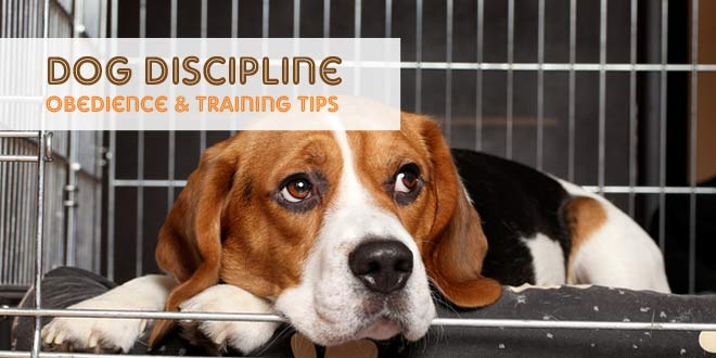 Dog Discipline: Obedience and Training Tips