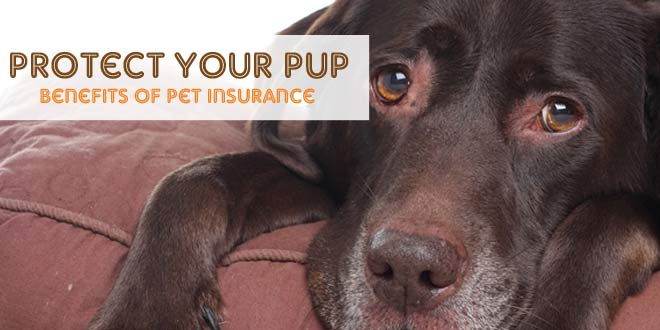 Protect Your Pup: Benefits of Pet Insurance