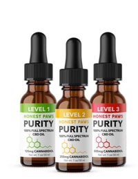 Best CBD Oil For Dogs: An All-Natural Way To Ease Anxiety and Pain?