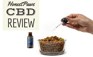 Person putting CBD oil in dog food (caption: Honest Paws Review)