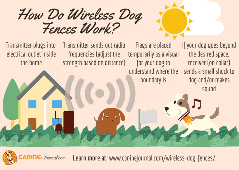 How Do Wireless Dog Fences Work? (Infographic)