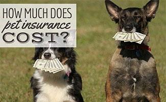 Two dogs with money in mouth (caption: How much does pet insurance cost?)