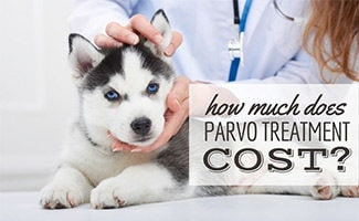 Puppy being held by vet (caption: How Much Does Parvo Treatment Cost?)