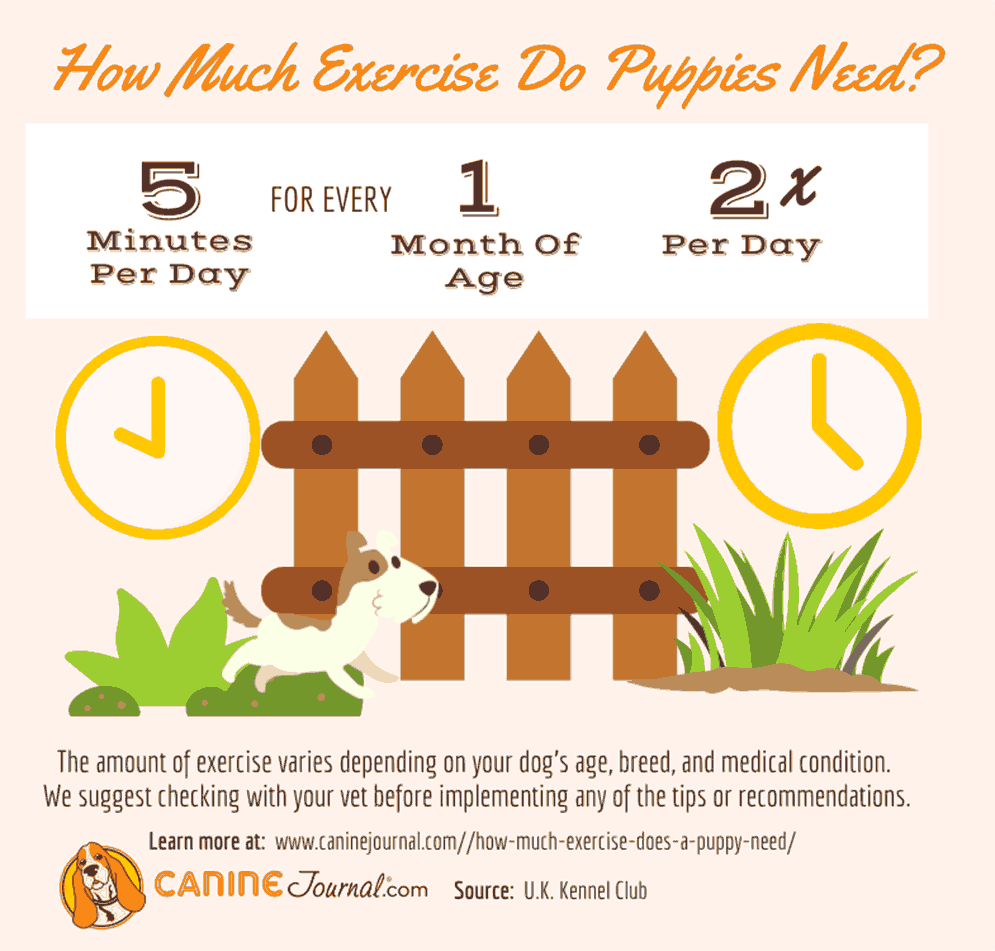 How Much Exercise Do Puppies Need? Infographic