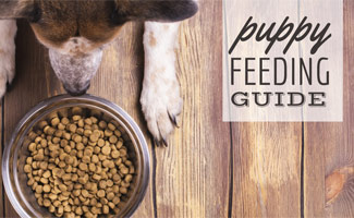Dog eating kibble out of dog bowl (caption: Puppy Feeding Guide)