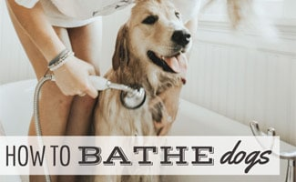 Girl giving lab a bath in tub