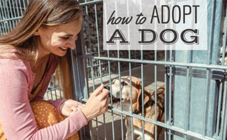 Girl at animal shelter with dog in cage (caption: How To Adopt A Dog)
