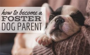 Dog with foster parent