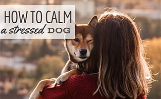 Girl holding and hugging a dog (Caption: How To Calm A Stressed Dog)