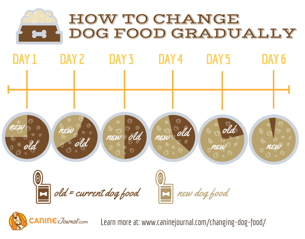 How To Change Your Dog's Food Safely Graphic