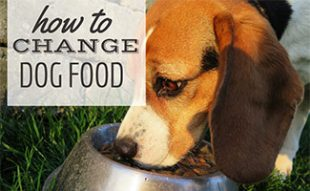 Dog eating out of bowl (caption: How To Change Dog Food)
