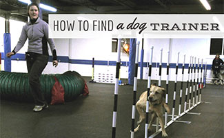 Dog doing agility course with trainer (caption: How To Find A Dog Trainer)