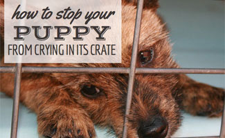 How To Stop Your Puppy From Crying In Its Crate