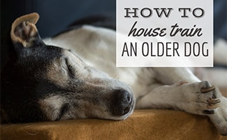 Dog sleeping on side (caption: House Training An Older Dog)