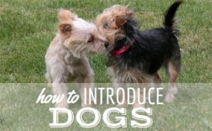 How to Introduce Dogs