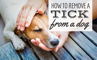 Person holding dog's head (caption: How To Remove A Tick From A Dog)