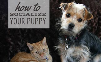Cat and dog on bed: How to Socialize Your Puppy