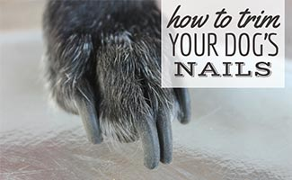 Dog's nails up close (caption:How To Trim Your Dog's Nails)