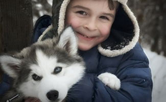 6-month-old Husky puppy with young boy