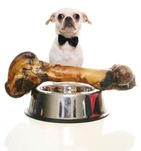Dog with large dog bone in bowl