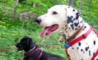 Rescue Dogs Archives | CanineJournal com