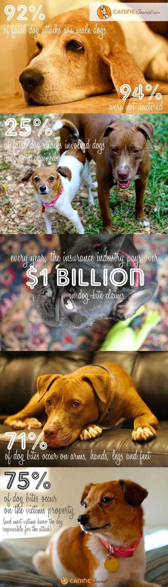 Dog Bite Statistics Infographic