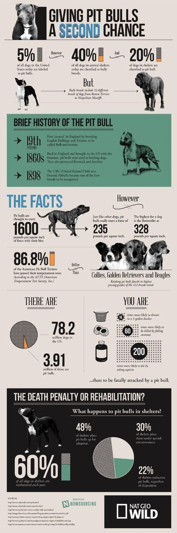 Displaying images for vicious dog breeds list - Pit Bull Facts Infographic