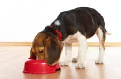 Puppy eating out of bowl