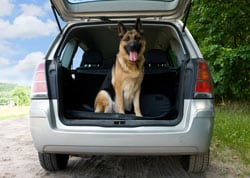 Dog riding in the back of a car