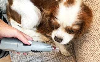 Introducing a dog To a nail grinder